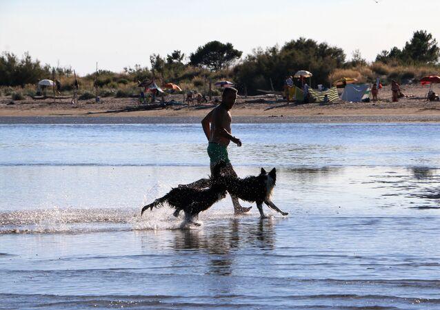 Un uomo con i cani al mare